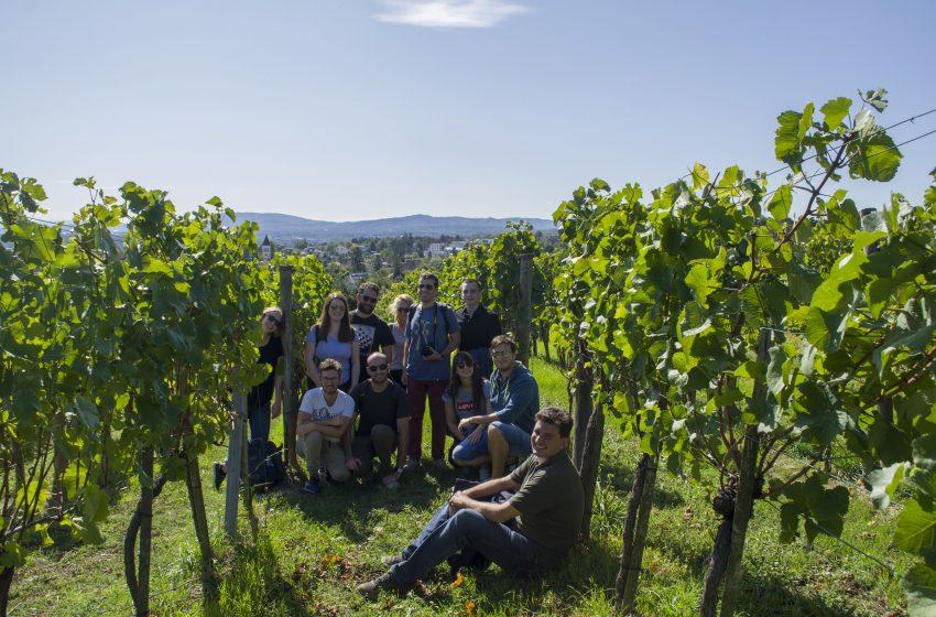 πεζοπορία/Wiener Weinwandertag